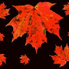 Leaves by MotherNature