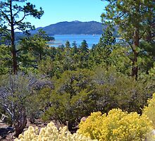 FALL COLORS SPECTACULAR IN BIG BEAR LAKE by CHERIE COKELEY