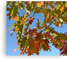BRIGHTLY COLORED FALL LEAVES Canvas Print