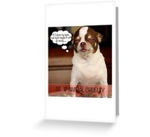 Stop Animal Cruelty Greeting Card