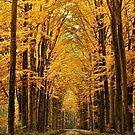 Yellow Light by EbyArts
