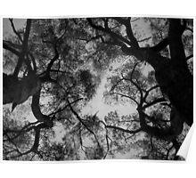 Scary Trees- Pimpala Track Stringybarks Poster