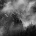 Forest in the French Alps... by Angelika  Vogel
