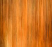 Fall Abstract Colors by Thomas Young
