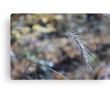 Foxtail in Fall Canvas Print