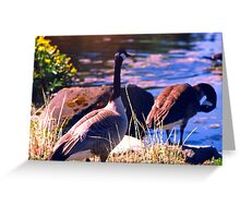 Wedded Bliss, Canada Geese in Springtime Greeting Card