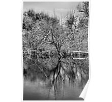 Monochrome Autumn Reflections  Poster