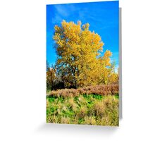 Autumn's Primary Colors Greeting Card
