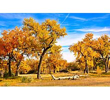 Simply Autumn  Photographic Print