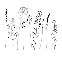 Meadow grasses and flowers. Photographic Print