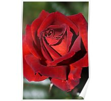 Hot Chocolate Rose Poster