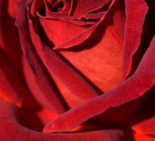 Hot Chocolate Rose Sticker