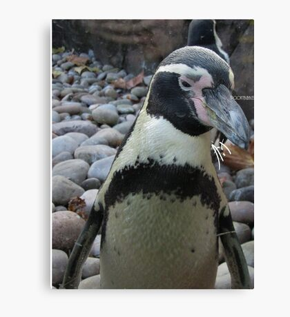 Penguin - ZSL Canvas Print