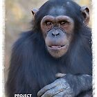 Project Chimpanzee- Lilly by Amy Atherton