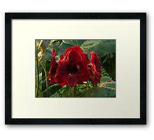 Vivid Scarlet Amaryllis Flowers - Happy Holidays! Framed Print