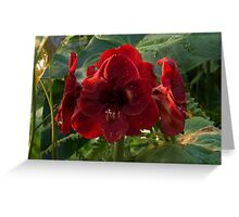 Vivid Scarlet Amaryllis Flowers - Happy Holidays! Greeting Card