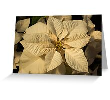 Elegant Ivory Poinsettia - An Exotic Christmas Greeting Greeting Card