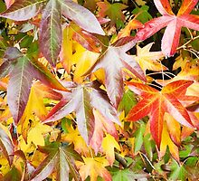 Autumn colours by Kell Rowe
