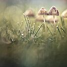 Getting wet in a row by Bob Daalder