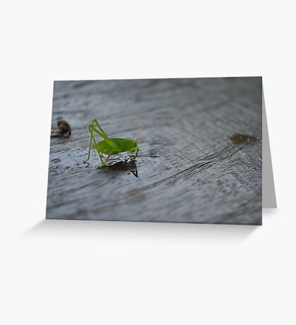 Grasshopper - Philippines Greeting Card