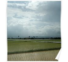 Cambodian paddy fields Poster