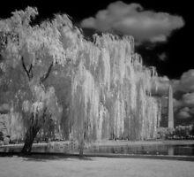 Tree, Clouds and a Pond by Bernai Velarde