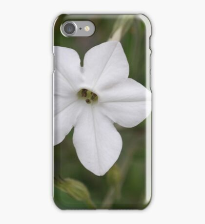 Tobacco flower iPhone Case/Skin