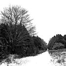 Winter Lane by Debbie Oppermann