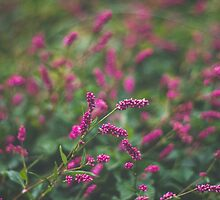 Pink Smartweed by Bethany Helzer