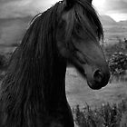 Friesian  by Raymond Kerr