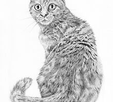 Beautiful Illustrated Cat Drawing by Catie Atkinson