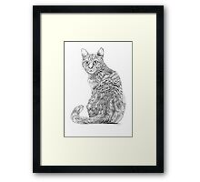 Beautiful Illustrated Cat Drawing Framed Print