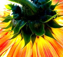 Sunflower Upside Down by ©The Creative  Minds