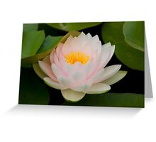 Pink Lotus with in pond. Greeting Card