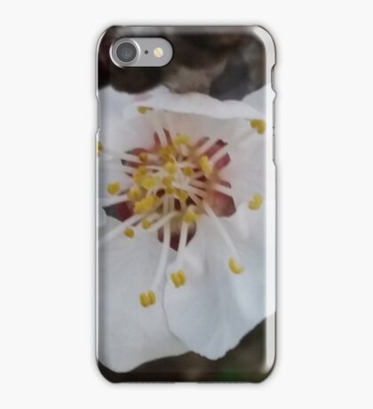 One lone white blossom - Spring iPhone Case/Skin