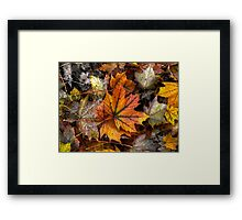 A Leaf Among Leaves ~ Leaves Fall Colors ~ Framed Print