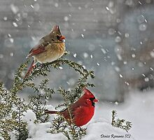 Mr. and Mrs. Cardinal by denise romano