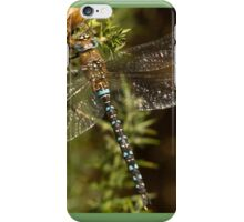 Migrant Hawker Dragonfly iPhone Case/Skin
