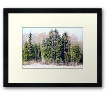 Evergreen and Deciduous Framed Print