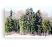 Evergreen and Deciduous Canvas Print