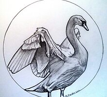 swan drawing by RobCrandall