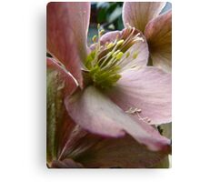 Petals and Poetry Canvas Print