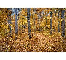 Golden Fall Colours Photographic Print