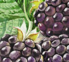Blackberry Bunch Sticker