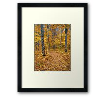 Golden Fall Colour Framed Print