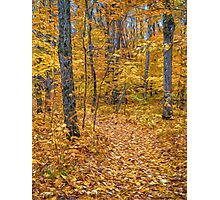 Golden Fall Colour Photographic Print
