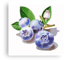 Blueberry Bunch Canvas Print