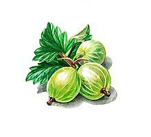 Gooseberry Bunch Photographic Print
