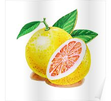 Ruby Red Grapefruit Poster