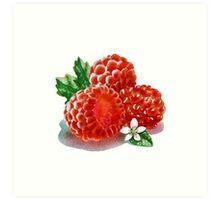 Raspberry Bunch Art Print